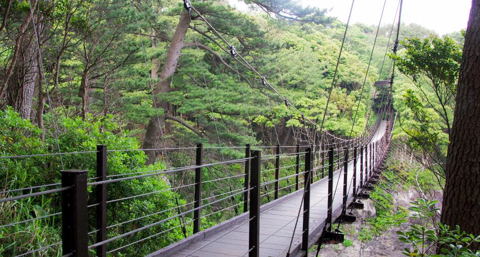 城ヶ崎海岸までの朝の散歩